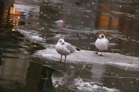 Hungry seagulls in Paris