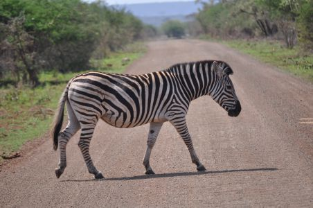 Zebra crossing by Denise