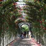 rose covered corridor