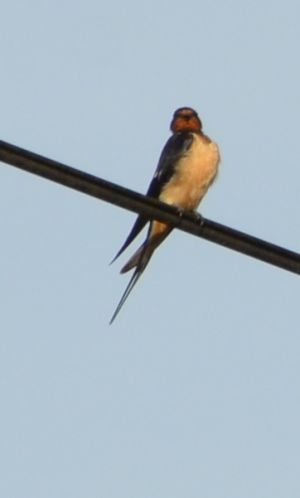On the wire by Richard